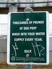 Dog Poop in Water